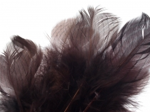 Decorative Pheasant Feather length approx. 4-12 cm