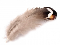 Ornamental Pheasant Feather length 5.5-12 cm