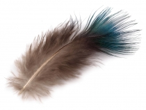 Decorative Peacock Feathers 5-8 cm