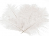 Ostrich feather length 18-20 cm